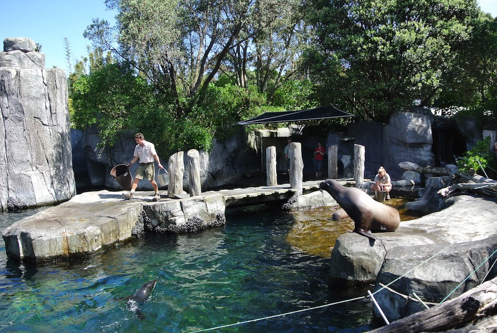 Aquarium design h2o systems ltd - Swimming pool maintenance auckland ...